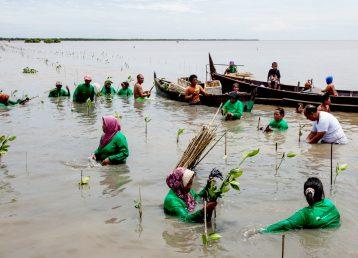 Plantation de palétuviers à Kampung Nelayan