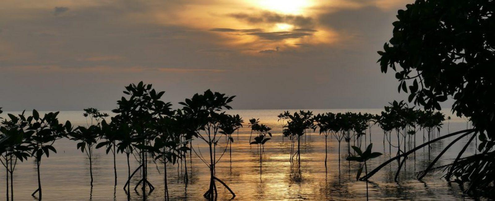 mangroves-2371062_1920