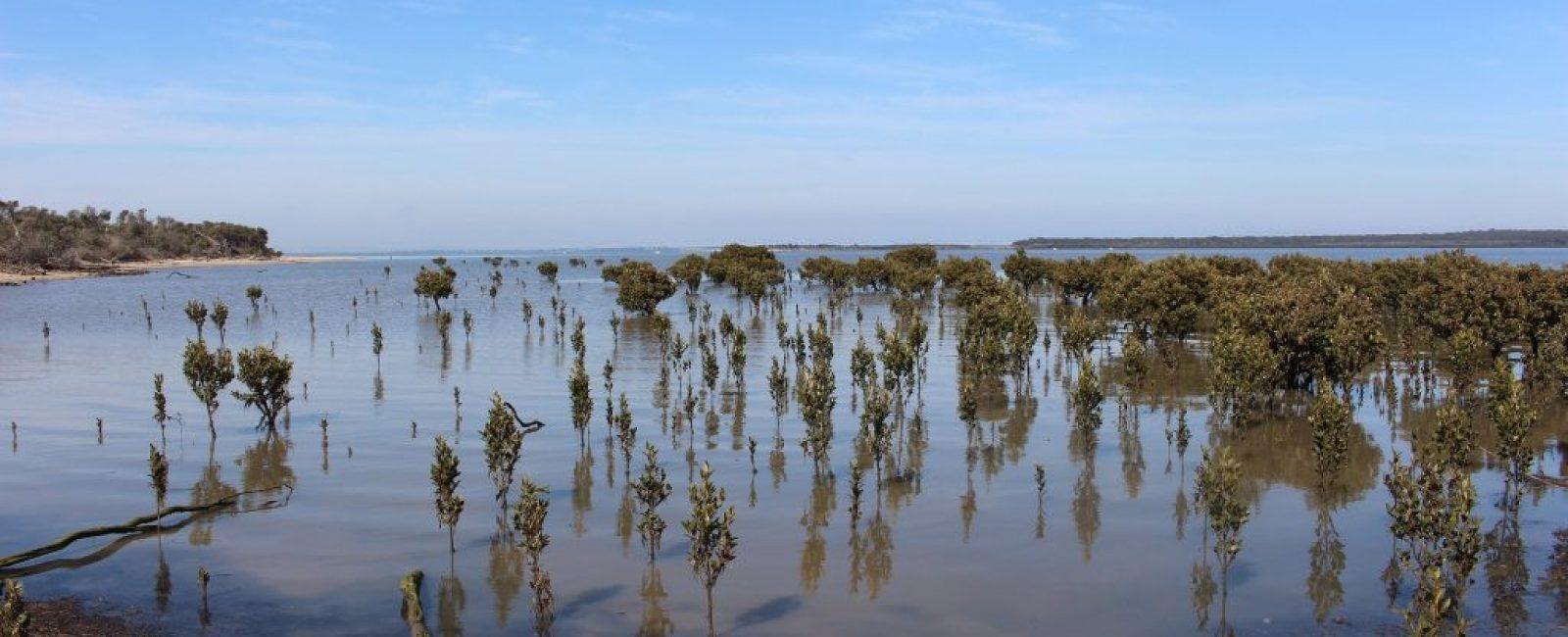 mangroves-2821770_1920
